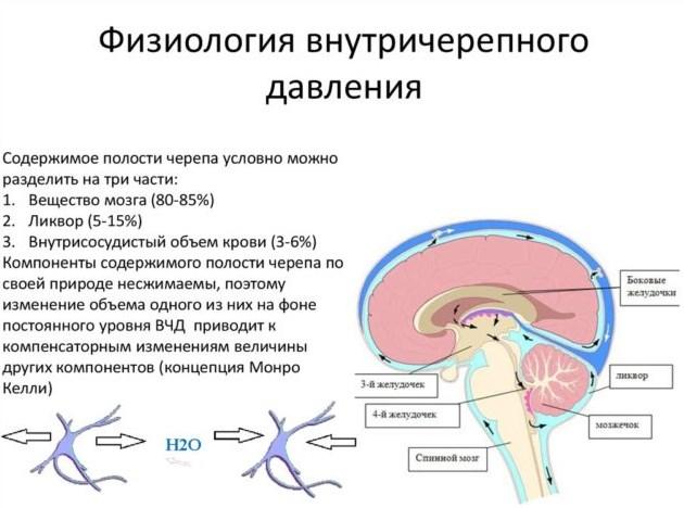 Физиология ВЧД