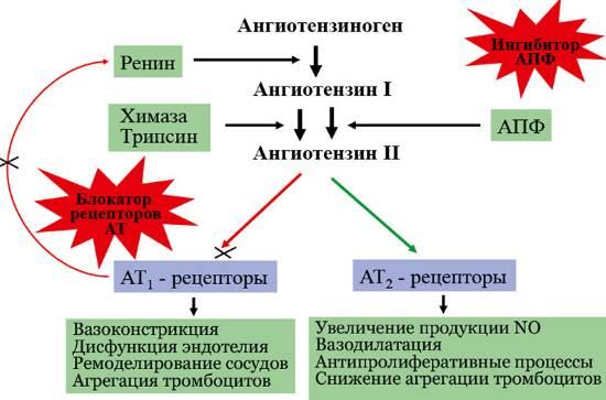 Блокаторы рецепторов ангиотензина