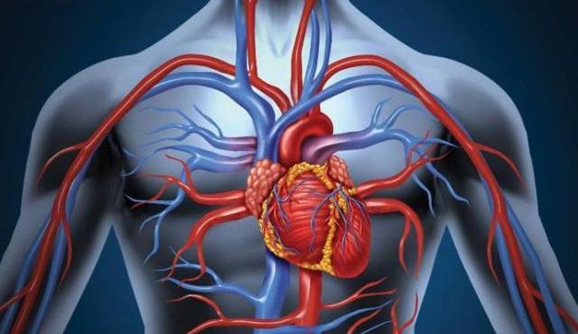 Кровообращение при гипертензии