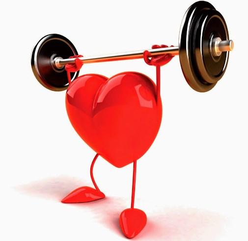 Сила сердечной мышцы