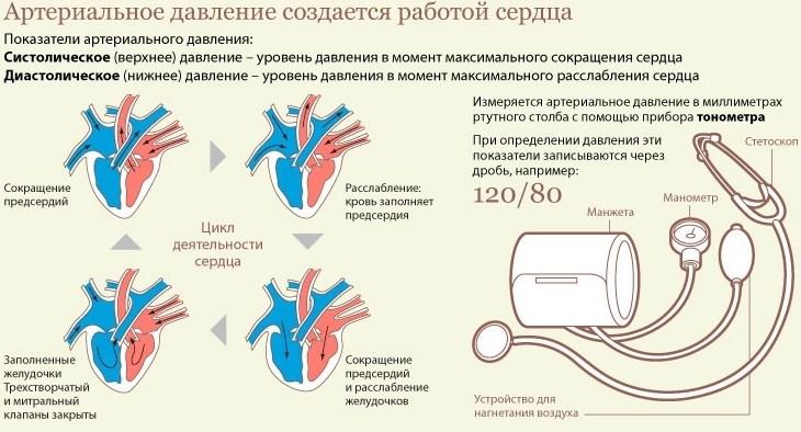 Составляющие артериального давления