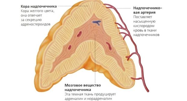 Изображение - Повышено нижнее давление и пульс nizhnee-davlenie-vysokoe-2