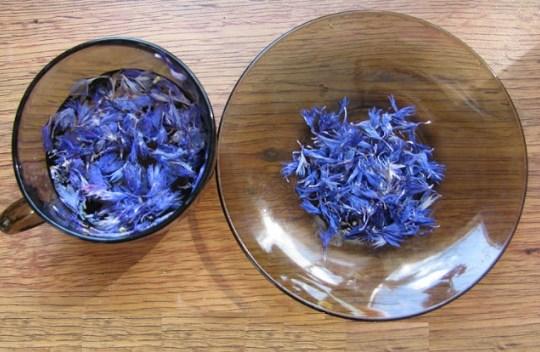 Цветки василька
