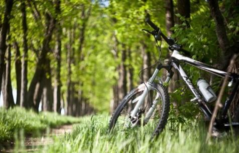 Велопрогулки для здоровья
