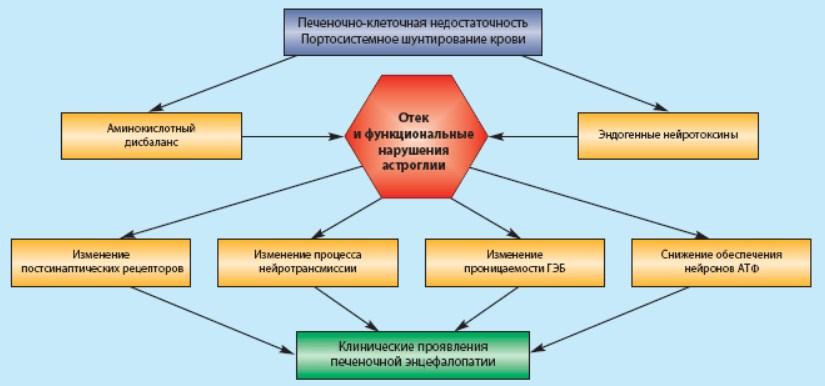 Печеночная энцефалопатия при портальной гипертензии