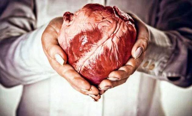Бывает ли рак сердца