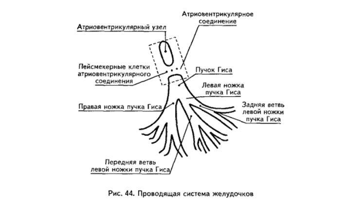 Нарушение внутрижелудочковой проводимости